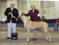 AKC / UKC GCH. Lagarada's Forever Lookin Back